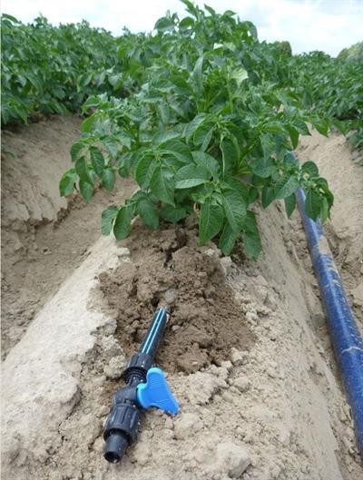 Mogelijkheden van druppelirrigatie en fertigatie in de teelt van aardappelen