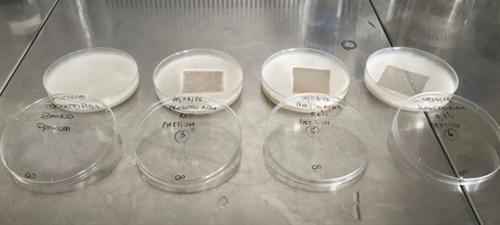 Figuur1: Schimmelgroei wordt beperkt bij aanwezigheid van de antimicrobiële stof.